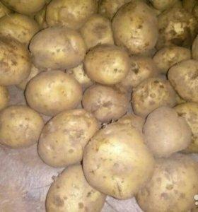 Жёлтый картофель