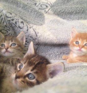 Котята ищут семью!