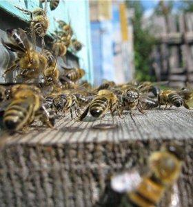Улий для пчёл, улики б/у