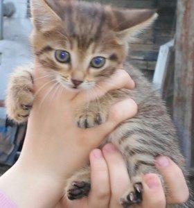 Отдам в хорошии руки милых котят