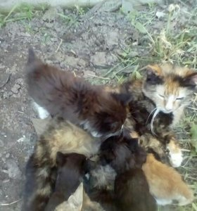 Котёнок от 100%кошки- крысоловки