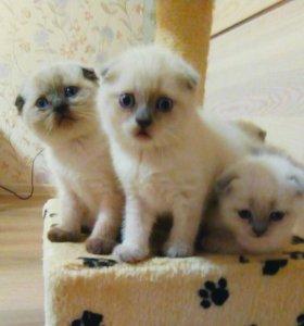 Чудо-малыши с голубыми глазами
