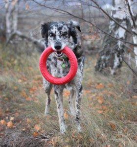 Кольцо игрушка для собак