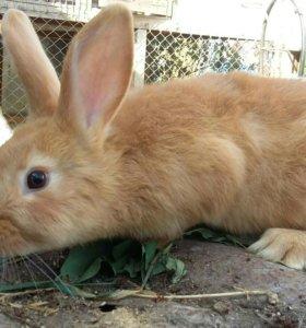 Продажа кроликов