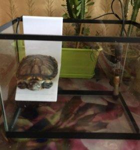 Черепаха + аквариум + водонагреватель + фильтр
