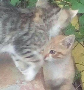 Брошенные Котята!