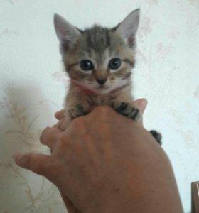Отдам 5 котят в добрые и хорошие руки!