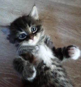 Котенок 😺