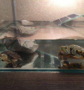 Черепашка с аквариумом и светильником