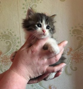 Котёночек ищет дом