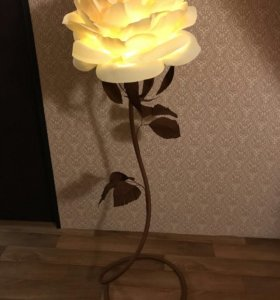 Роза ночник