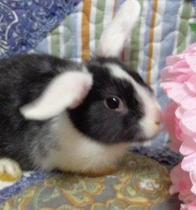 Вислоухие декоративные кролики