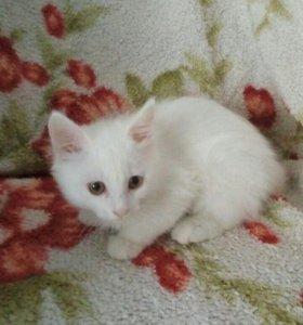 Котик 4 месяца