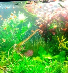 Аквариумные растения,рыбки и креветки