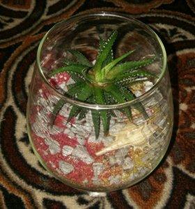 Флорариумы. Мини-садик в бокале