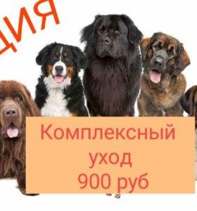 Груминг крупных и средних пород собак купание