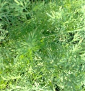 Укроп зелень 100 грамм 20 рублей