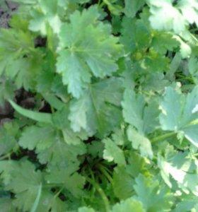 Петрушка зелень 100 грамм 20 рублей.