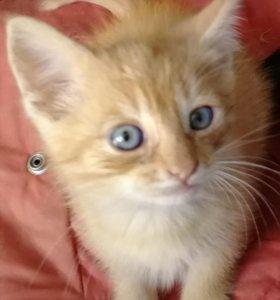Котята мимимишные