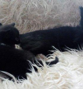 Котята от кошки- мышеловки