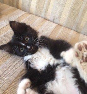 Котенок домашний