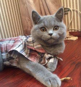 Домашний, послушный котик.