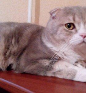Кот,вязка