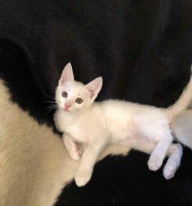 Котенок Безе ищет дом