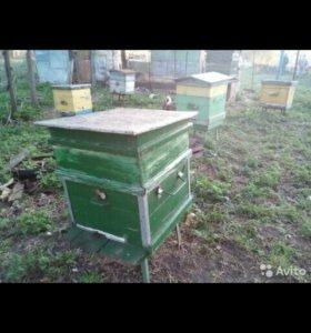 Пчёлы с ульями