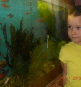 аквариум с рыбками .инвентарем и тумбой