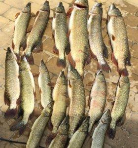 Рыбалка в х. Садки краснодарского края
