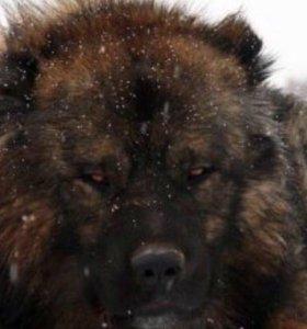 Дрессировка собак ОКД,УГС с передержкой у кинолога