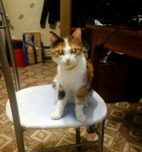 Кошка Маня