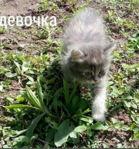 Котята, две девочки