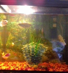 Продам аквариум 35литров с помпой.