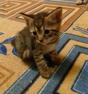 Котята в добрые руки и подарок