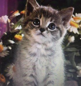 Смотритель за кошками