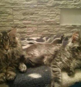 Кот и кошка 4 месяца