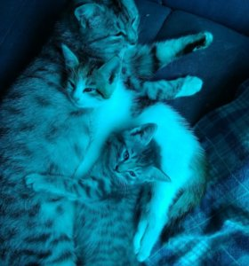 Котята, приносящие счастье