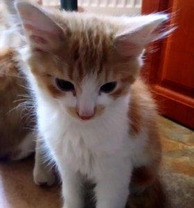 Рыжие котята в добрые руки 👫