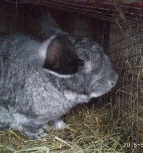продаются кролики по разным ценам
