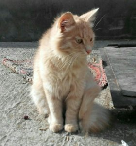 Котик 5 мес.