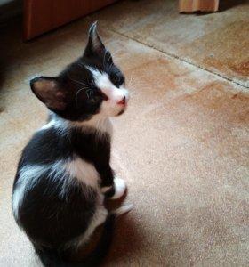 СРОЧНО!!! Котята 2мес