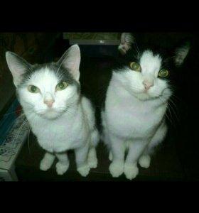 Кошечка и Котик бесплатно!!!!
