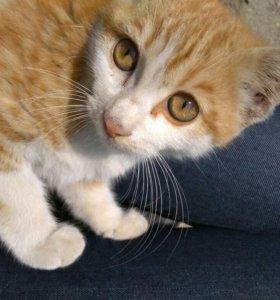 Котенок мальчик котята