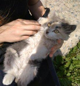 Котёнок девочка котята