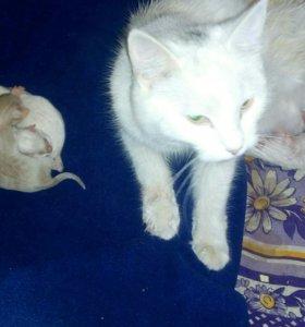 Отдам даром троих котят в хорошие руки.Бесплатно
