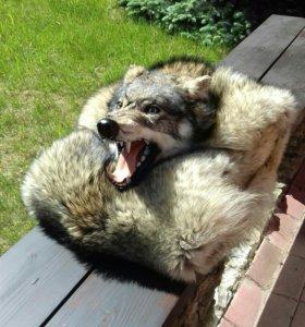 Ковёр волк сибирский
