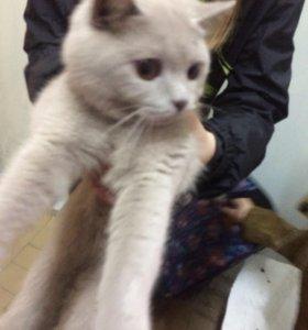 Котик (Ася)