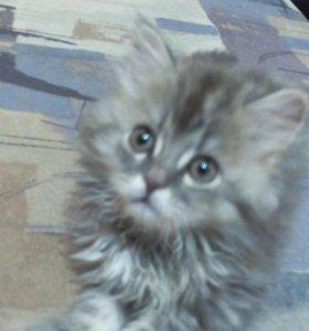 Миленький котик в добрые руки